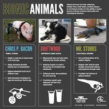 My Bionic Pet Series