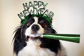 Dog Celebrating New Year