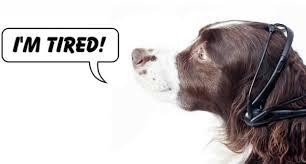 Dog wearing No More Woof translator