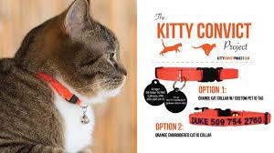 Kitty Convict Cat Wearing Orange Collar