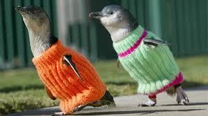 Penguin wearing jumpers
