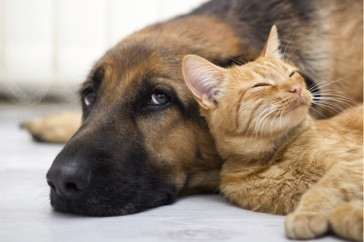 How Much Will Your Pet Cost You