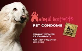 Pet Condoms