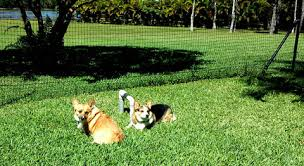 Pet Playgrounds Fencing System in Yard