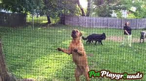 Pet Playgrounds Fence