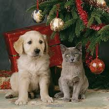 Dog and Cat with Christmas Tree