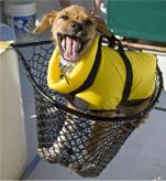 Dog in Fishing Net