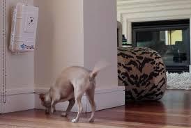 PetziConnect unit with dog