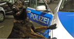 Police dog wearing booties