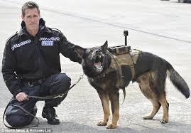 Police dog wearing camera