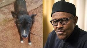 Dog and President Muhammad Buhari