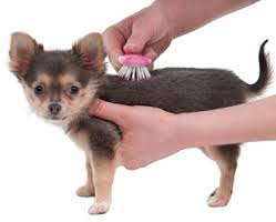 Puppy Being Brushed