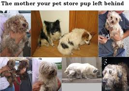Puppy Mill Mothers