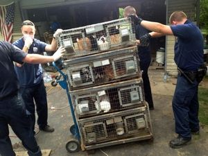 Rabbits being removed from home