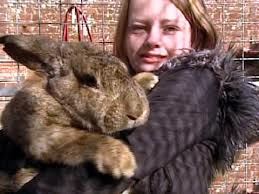 Ralph, the 50-pound rabbit