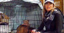 Renee Zellweger at Shelter