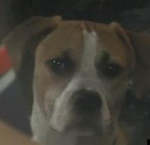 Roger Brown's Dog