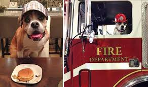 Romeo with Cheesburger and on Fire Truck