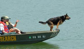 Dog Searching in water