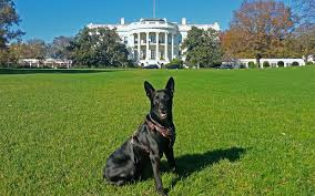 Secret Service Dog in front of White House