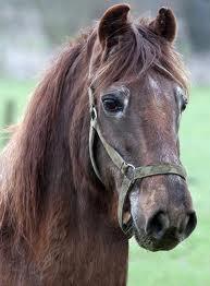 Shayne the oldest horse