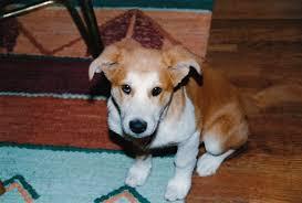 Shirelle as a Puppy