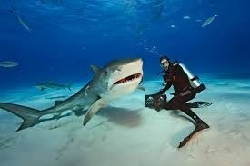Brian Skerry Underwater With Shark