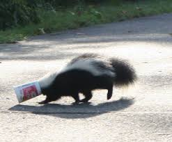Skunk With Container on Head