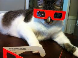 Cat Wearing Eclipse Glasses