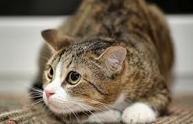 Cat suffering in silence