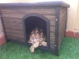 Sulcata in a Doghouse