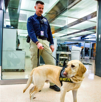 TSA canine rejects get adopted