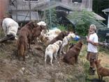Thayne Hamilton with dogs