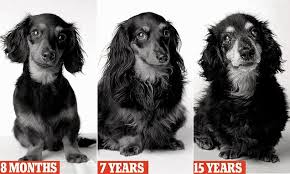 Dog Aging Over The Years