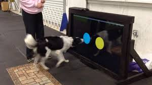Dog Using Touchscreen