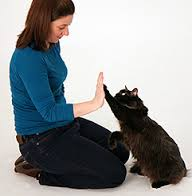Training a cat to high-five