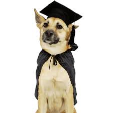 Trained Dog Wearing Graduation Cap