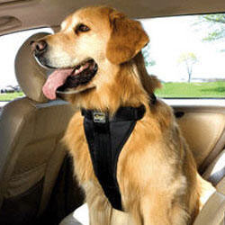 Tru Fit Dog Harness by Kurgo