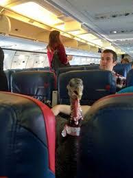 Turkey on Airplane