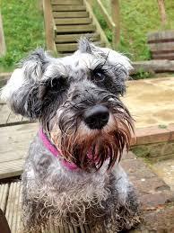 Dog with Wet Beard