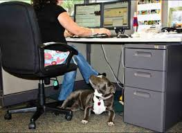 Dog in the Workplace