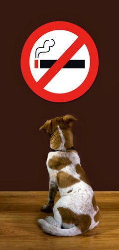 E-Cigarettes and Dog