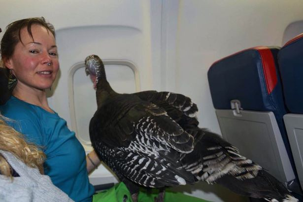 Emotional Support Turkey