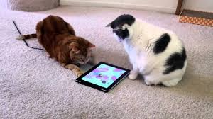 Cats Playing with iPad