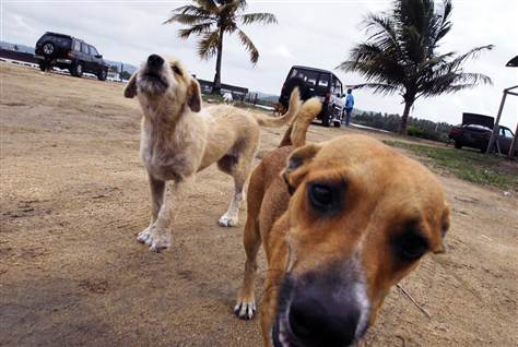 Puerto Rican Homeless Pets