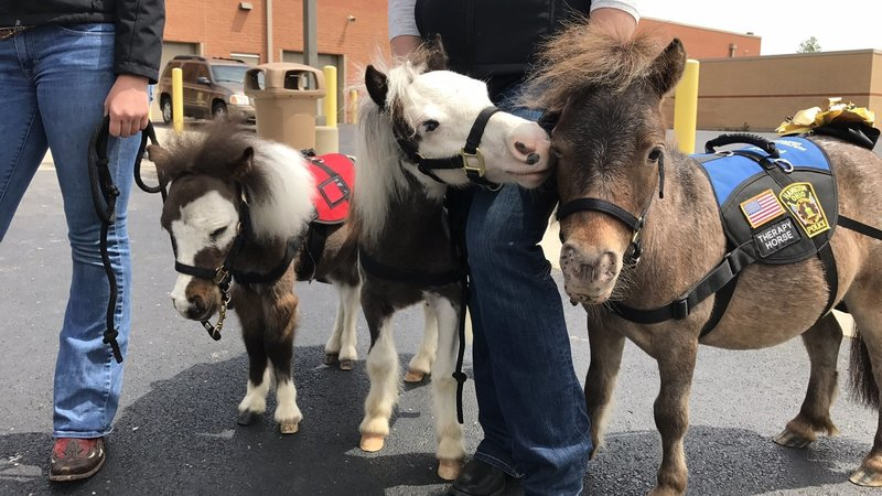 Airport Therapy Horses