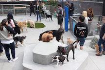Amazon Dog Park