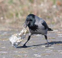 Bird Picking Up Trash