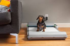 Dog on BrilliantPad