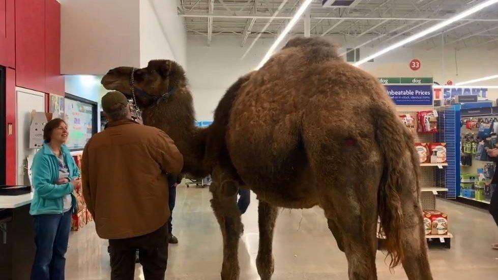 Camel in PetSmart